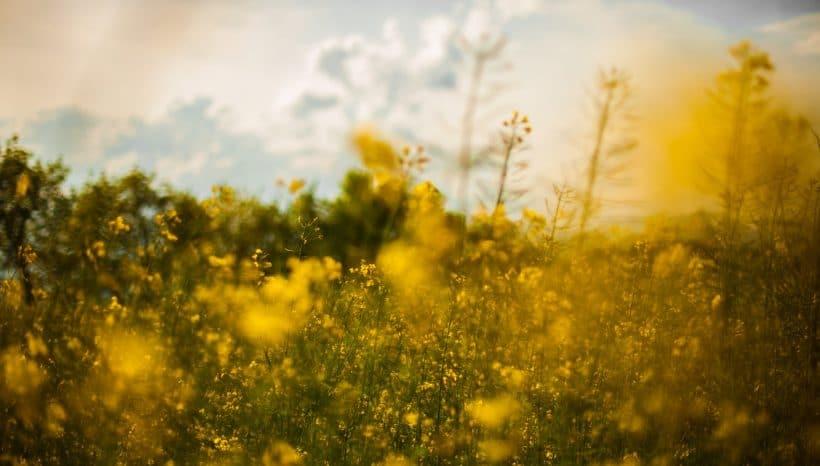סדנת שבת בנווה שלום עם יעל – מרץ
